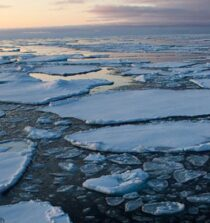 Pancake ice on Arctic Sea Ice