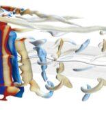Rotor_sail_(vortex_visualization)